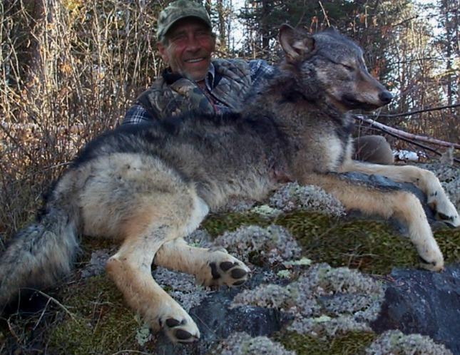 2013 Wolf Hunts