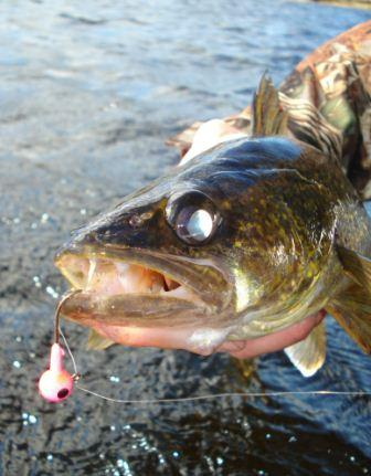 Spring time walleye wawang lake resort for Best time to fish for walleye