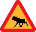 Moose-warning