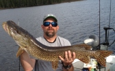 "40"" northern pike"
