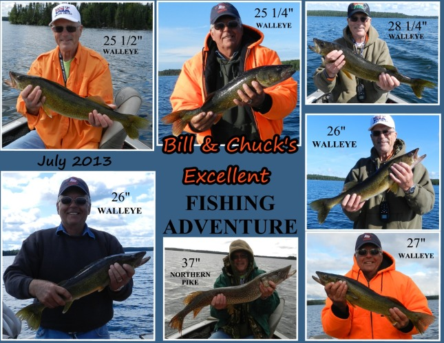 The week of July 2013 proved to be a successful walleye fishing week for Bill and Chuck indeed!