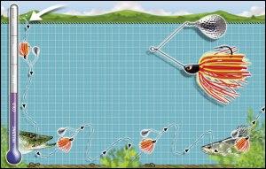 spinner-bait-diagram