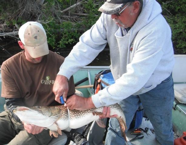 Fishing regulations ontario zone 4 wawang lake resort for Ontario fishing license