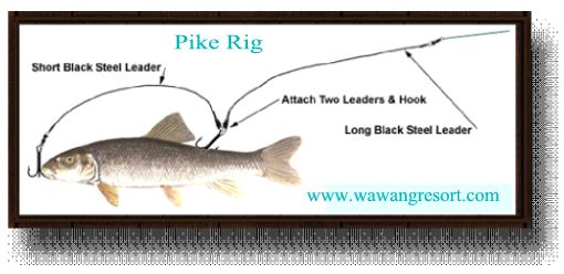 wawang lake pike rig